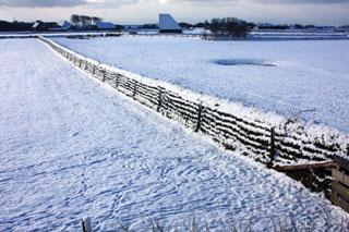 Tuunwal in sneeuw